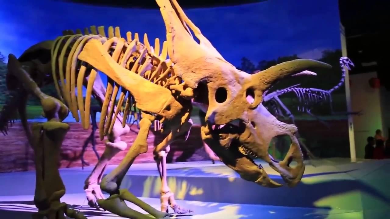 MUSEO DE LA EVOLUCIÓN PUEBLA PUE - YouTube