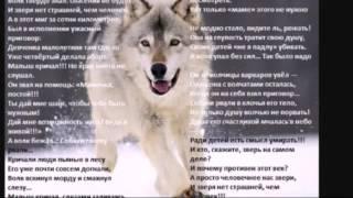 Очень грустное видео про бездомных животных