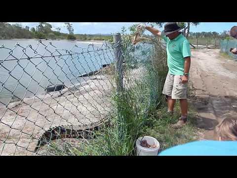 Koorana Crocodile Farm - Coowonga, Queensland, Australia. (Part 1/2)