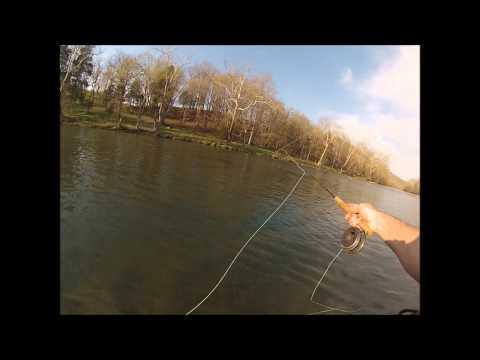 SOHO Fly Fish