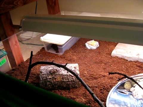 Ornate Box Turtle New Setup Youtube