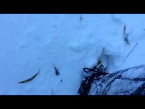 Украину засыпало снегом. Ноябрь 2016 г.