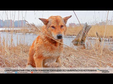 Северодвинск — Википедия