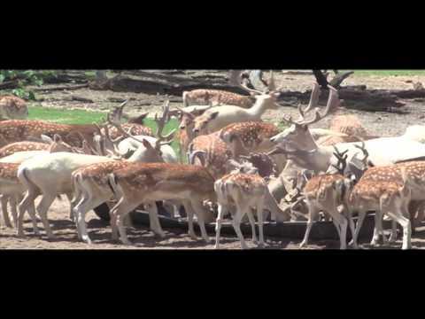 Giant Velvet Buck Killed In Florida With South Coast Safaris