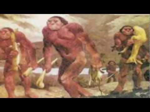 Evolution of Life According to the Spiritist Teachings