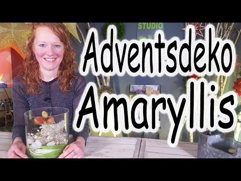 DIY: Amaryllis im Glas | Adventsdeko | Tischdeko | Weihnachtsdeko | Windlicht | Floristik24