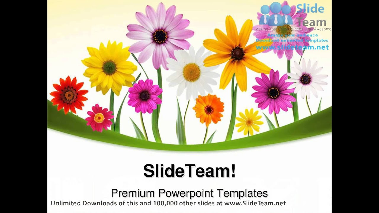 Summer Daisies Beauty Powerpoint Templates Themes And Backgrounds