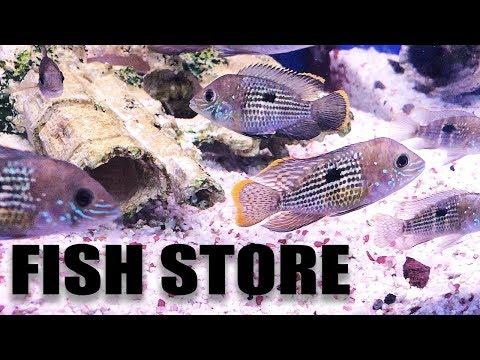 Aquarium Fish Store Tour - MY LFS