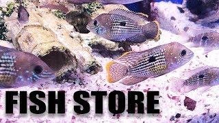 aquarium-fish-store-tour-my-lfs