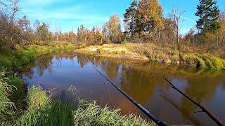 ДИКАЯ ЛЕСНАЯ РЕЧКА! Ловля щуки на спиннинг в золотую осень! Рыбалка в октябре! Дикая природа!