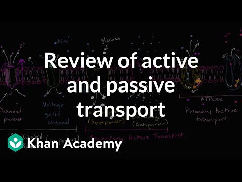 Uniporters, symporters and antiporters | Biology | Khan Academy