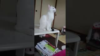 生後4ヶ月の猫 カカカ