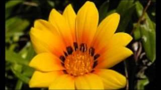 NELSON EDDY & JEANETTE MACDONALD- WILL YOU REMEMBER (SWEETHEART)?