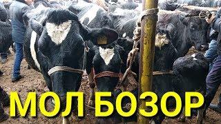 Заказ 2019 МОЛ БОЗОР НАРХЛАРИ