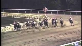 2002 東京盃(アインアイン)