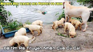 Ngày 55 | Cảm động chó mẹ Kİm Chi dạy các con tập bơi - Đã tìm ra truyền nhân của Củ Cải