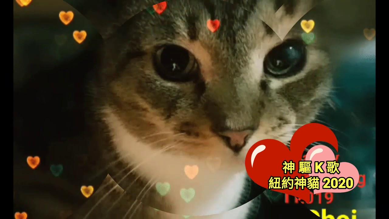 《神驅- 至冧迷暈K歌 》- 紐約神貓亂入合唱 - YouTube