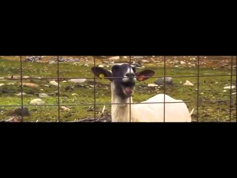 Taylor Swift - Trouble (Goat Remix)