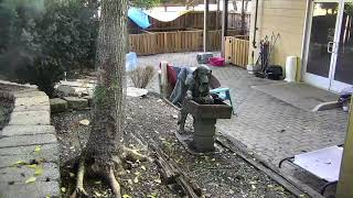 Outside Dog Yard Cam 07-18-2018 05:12:39 - 06:12:40