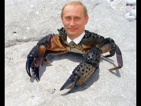 Браконьеры наловили в Черном море крабов на 24 млн грн, - Госпогранслужба - Цензор.НЕТ 2416
