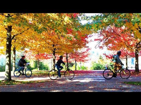 Fall Season In Vancouver, British Columbia, Canada