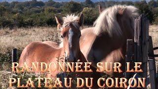 Ardèche - Randonnée sur le Coiron