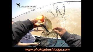 Insider Bass Fishing Letsibogo; Zoom Magnum Fluke