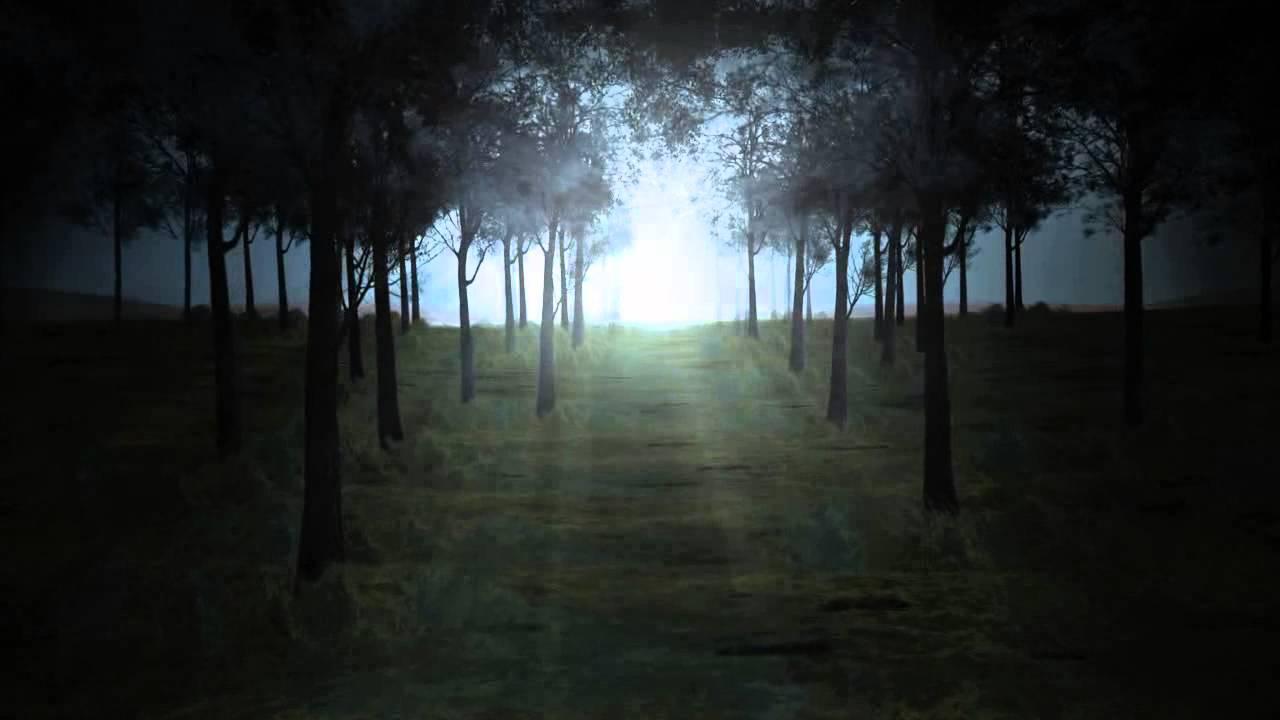 Скачать звуки ночного леса