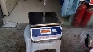 видео Купить весы CAS SW-DD (двусторонний дисплей) в Санкт-Петербурге