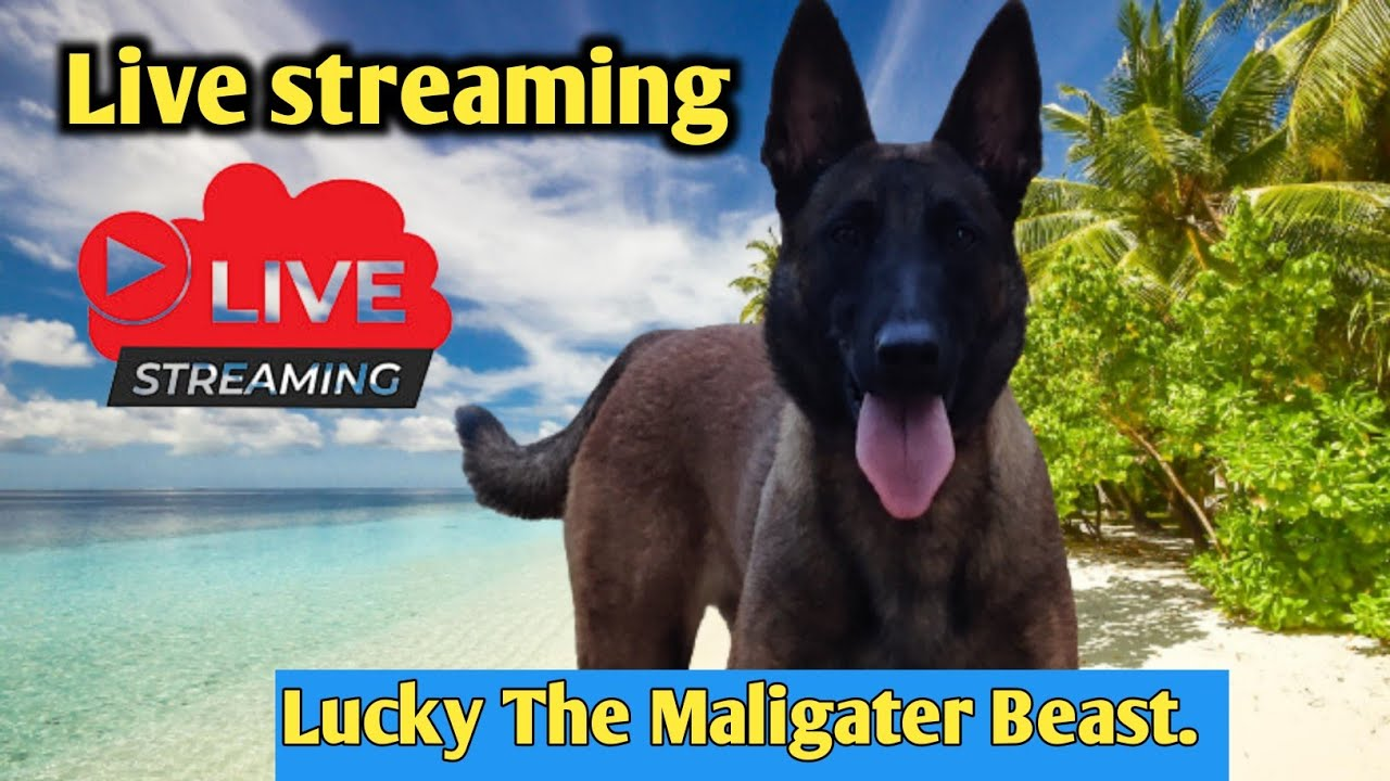Live with Balu's k-9 Dog training in telugu.