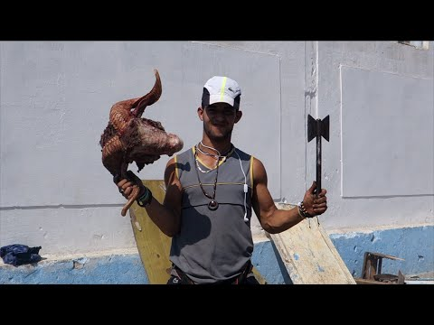 Disgusted and disturbed vegan in Morocco Eid al-Adha