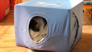 Домик для кошки своими руками из картонной коробки и футболки