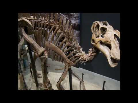 Dry Mesa Dinosaur Quarry  in Southwestern Colorado United States | What is Bone Quarrying