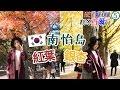 [中字] 南怡島賞紅葉+銀杏 & 正宗韓牛食店推介! |【2016秋冬首爾行】 EP5 | STELLA MA