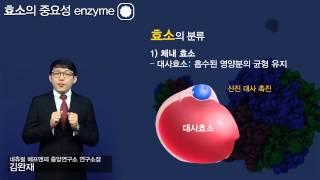 김완재 효소의 중요성