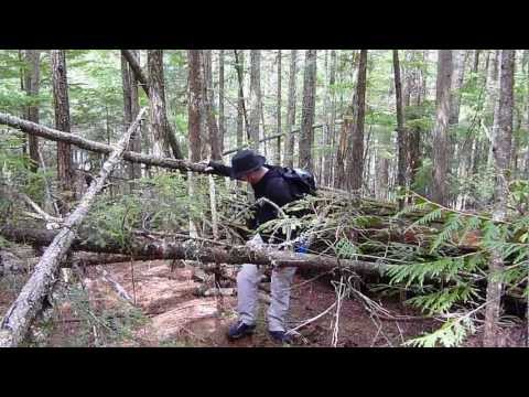 Spring Survival - Canadian Forests Part 1