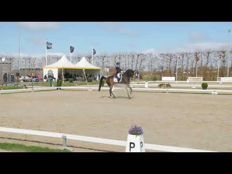 Sarah MILLIS GBR Grand Prix CDI Zeeland 2018 HOFJUWEL