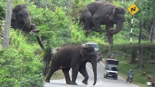 Wild elephant breaking an Electric fence !