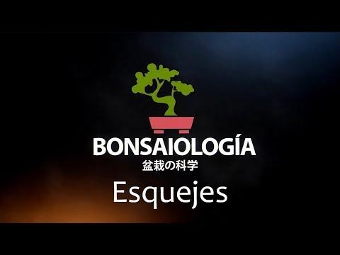 fisiología-vegetal-bonsai---esquejes