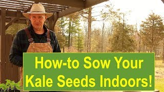 Basic Gardening Tips: Tips and Ideas on How-to Sow Your Kale Seeds Indoors