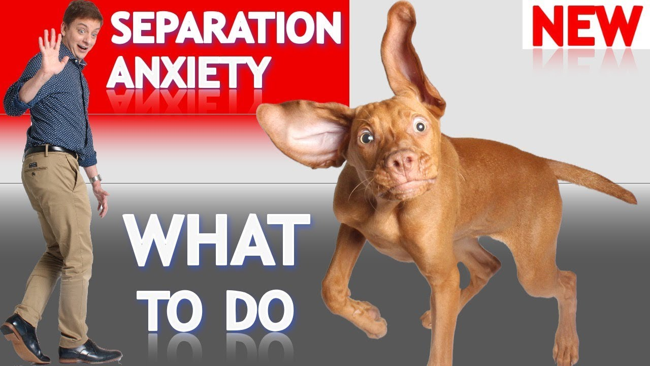 Prozac for Dogs -5 No-Fail Steps to Weaning - Your Dog's Health Matters