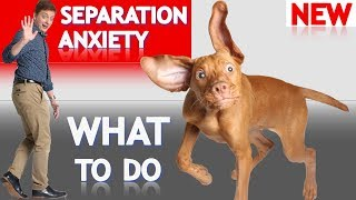 What To Do About Your Dog's Separation Anxiety