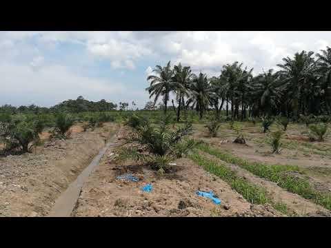 29 acres Oil Palm Land at Ayer Baloi, Pontian RM165k per acre 0197770909