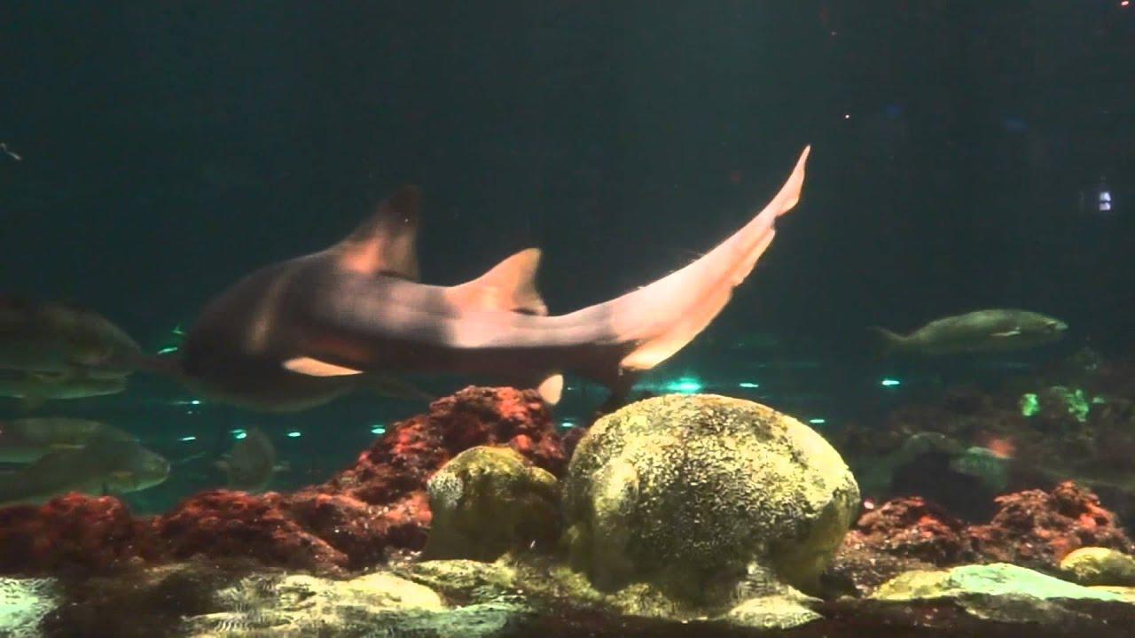 Freshwater aquarium fish orlando - Sharks Underwater Grill Seaworld Orlando Florida