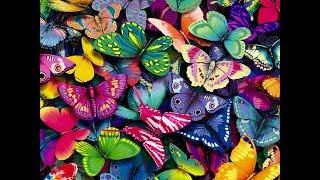 очень красивые бабочки фото