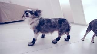 ПЕРВЫЙ РАЗ НАДЕЛИ БОТИНКИ ДЛЯ СОБАК | ЭПИК | ОБУВЬ ДЛЯ СОБАК(Это эпик))) Софи и Эйван первый раз одели обувь для собак! MUST HAVE Осень-зима Одежда для собак: https://www.youtube.com/watch?v=..., 2016-09-18T09:15:45.000Z)