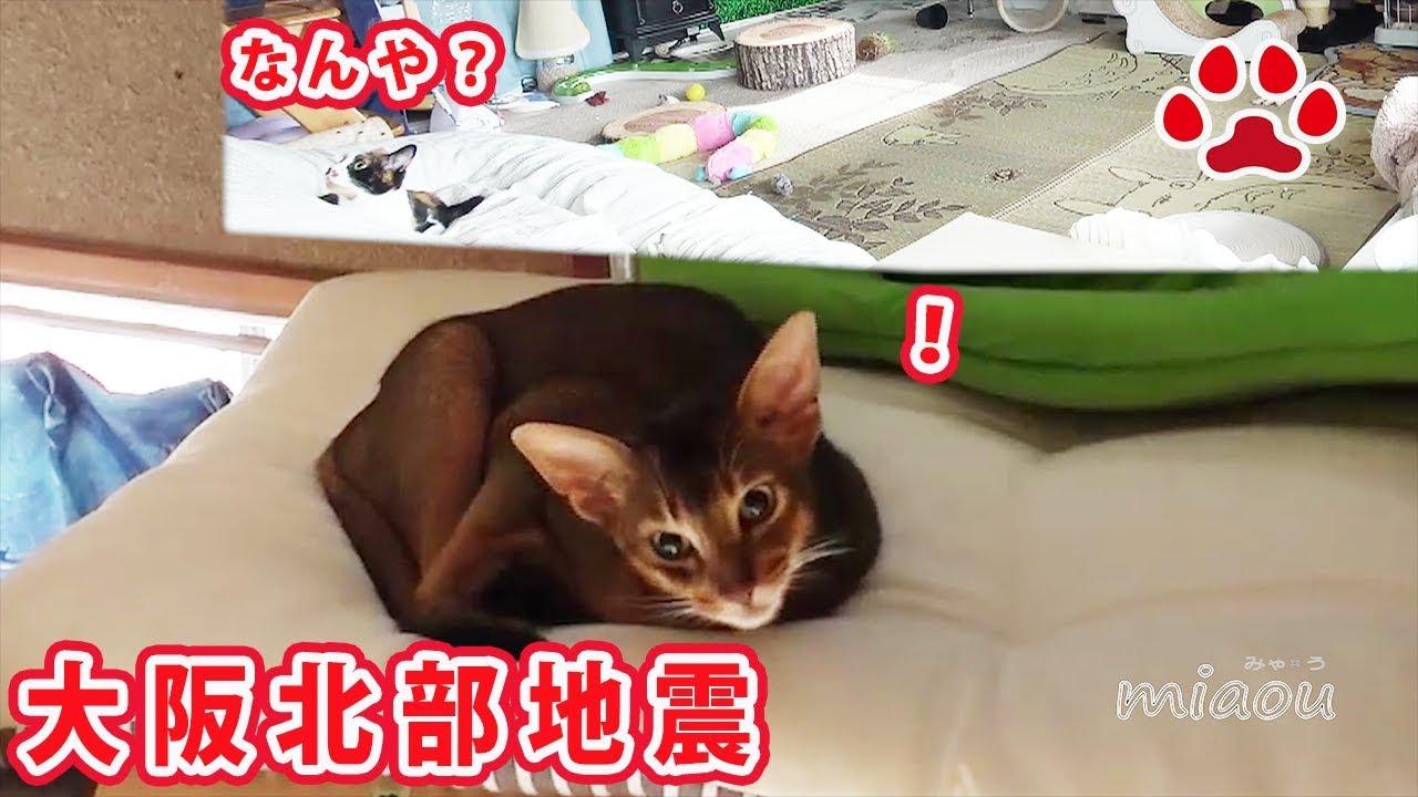 大阪北部地震 猫部屋の様子 Osaka earthquake. Cat room video.