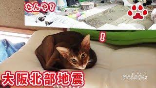 この度の大阪北部地震の報に接し、心よりお見舞い申し上げますとともに...