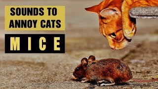 SOUNDS TO ANNOY CATS | Mice Sounds | Make your Cat Go Crazy! HD