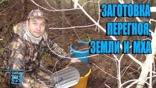 видео Мульчирование почвы комнатных растений